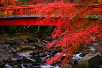 静岡県 修善寺温泉の紅葉と桂川の桂橋