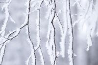 雪に覆われた樹氷