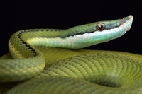 ボリビア 蛇