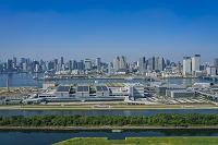 東京都 豊洲市場と晴海方面のビル群