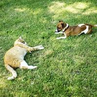芝生に寝そべる犬と猫