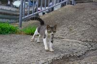 大阪府 阪南市 猫