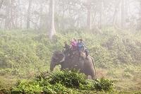 ネパール チトワン国立公園