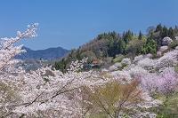 長野県 陸郷夢農場