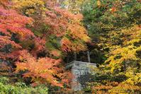 長野県 阿弥陀寺 鐘楼