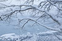 青森県 十和田湖畔