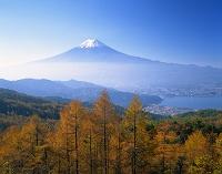 山梨県・富士河口湖町 カラマツと河口湖と富士山