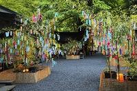 京都府 貴船神社の七夕笹飾り