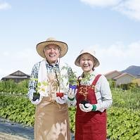 苗を持って畑に立つシニア夫婦