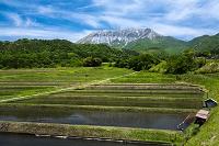 鳥取県 江府町 棚田と大山南壁