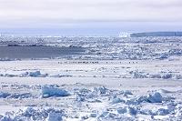 南極 ウェッデル海 流氷