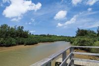 沖縄県 島尻マングローブ林