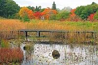 長野県 信濃町水生植物園