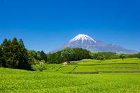 静岡県 富士山とお茶畑