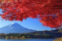山梨県 河口湖より紅葉と富士山