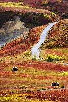 アメリカ合衆国 デナリ国立公園