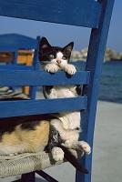 ギリシャ 海辺の椅子に座る猫