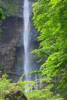 新緑の船尾滝