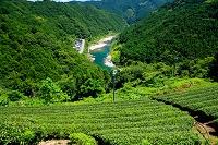 高知県 お茶の段々畑と仁淀川