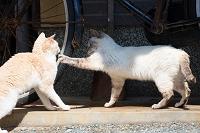 福岡県 島の猫