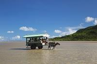 沖縄県 水牛車