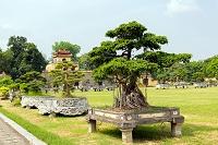 ベトナム タンロン遺跡 植木と盆栽