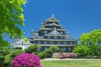 岡山県 岡山城とツツジ