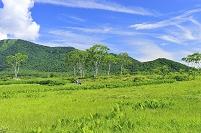 群馬県 尾瀬 中田代下大堀から望む白樺と景鶴山