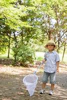 夏の日の日本人の子供 昆虫採集
