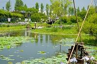 千葉県 水生植物園