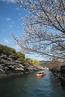 十石船が行く 春の岡崎疎水 洛東 京都