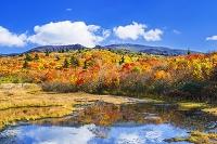 秋田県 イワカガミ湿原と栗駒山