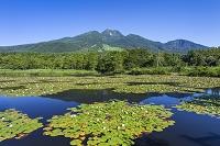 新潟県 いもり池と妙高山