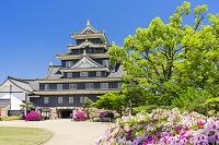 岡山県 ツツジと岡山城