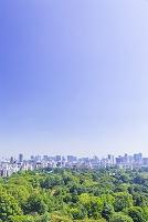 東京都 ビル群