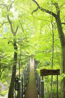 山梨県 一之釜つり橋と新緑