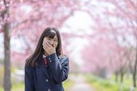 桜並木の前で口を押さえる女子学生