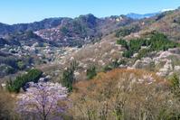 長野県 陸郷の山桜(桜仙峡)と山並みと青空