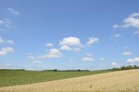 美瑛のビート畑と小麦畑