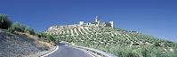 モタ城とオリーブ畑