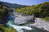 奈良県 新緑の夢のわだ 吉野川宮滝