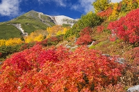 長野県 乗鞍岳の紅葉