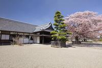 茨城県 弘道館と左近桜