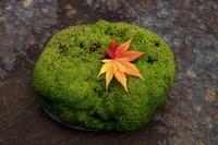 苔の上の落葉