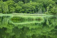 北海道 姫沼