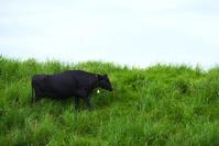 阿蘇の黒毛和牛