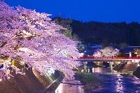 岐阜県 高山の宮川の桜