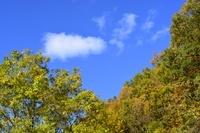 紅葉 一庫ダム付近の風景