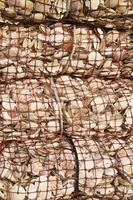 北海道 稚内港のホタテの貝殻