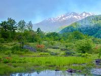 長野県 乗鞍岳とツツジ